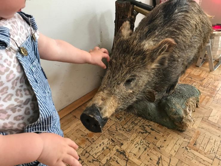Stuffed wild boar - German Hunting and Fishing Museum - Munich - Wahlmünchnerin
