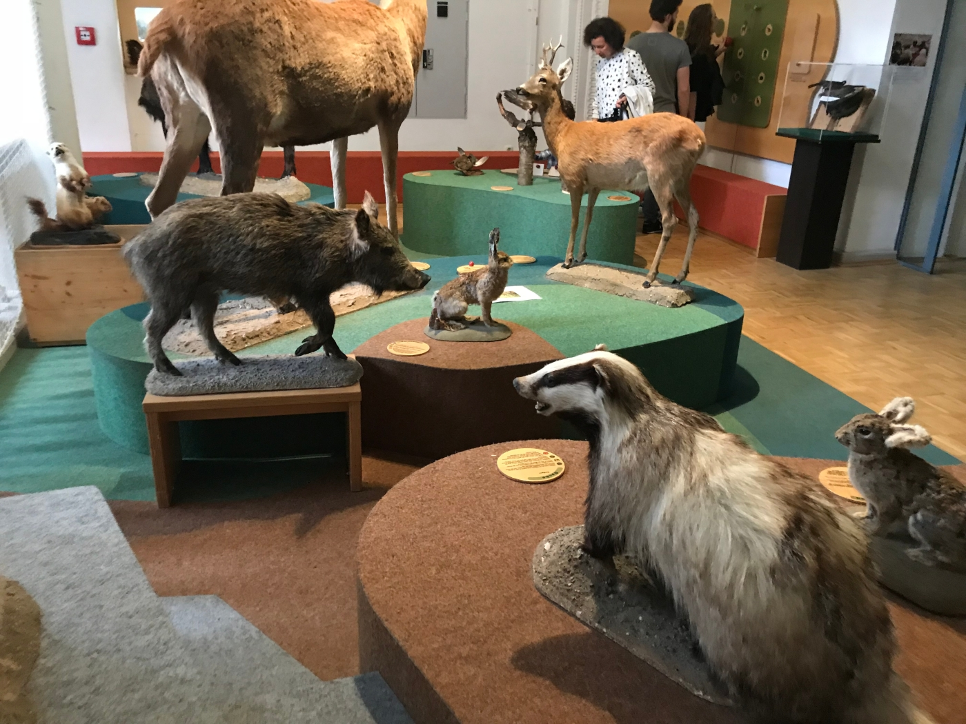 Second level - taxidermied animals - German Hunting and Fishing Museum - Munich - Wahlmünchnerin