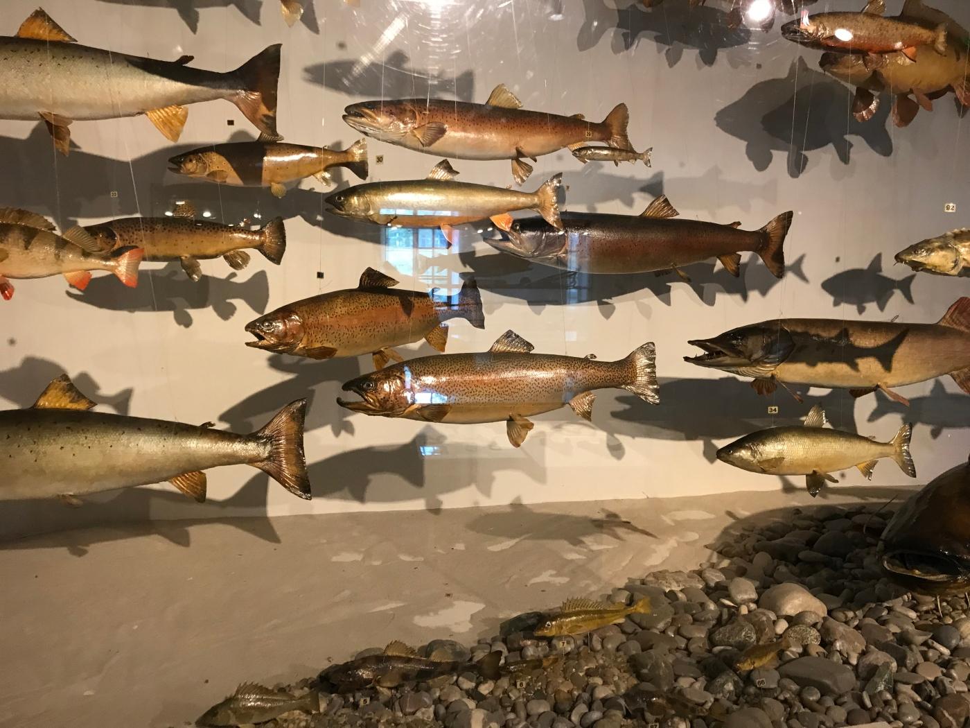 Fish - German Hunting and Fishing Museum - Munich - Wahlmünchnerin